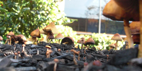 how to get rid of mushrooms in mulch